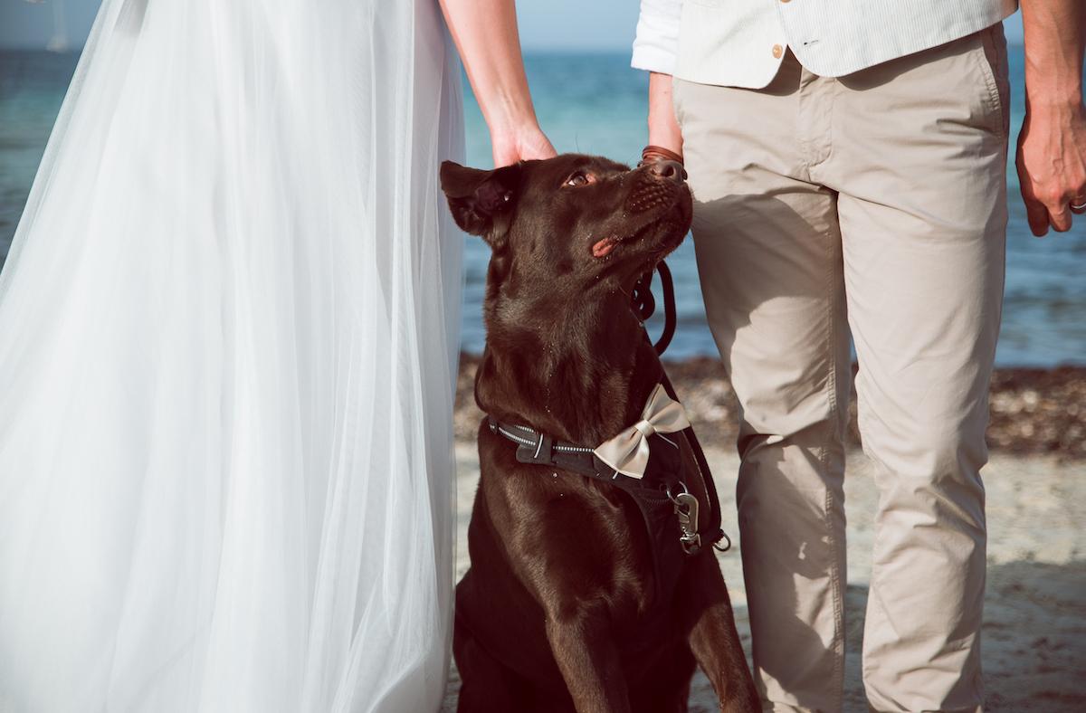 le coeur dans les etoiles - wedding planner - sardaigne - italie - luberon - provence - mariage sardaigne - tania mura - chien maries