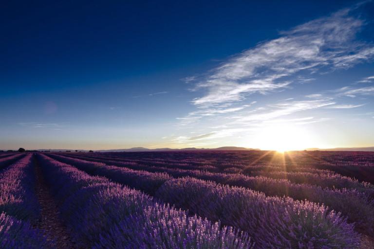 lavande, mariage en Provence