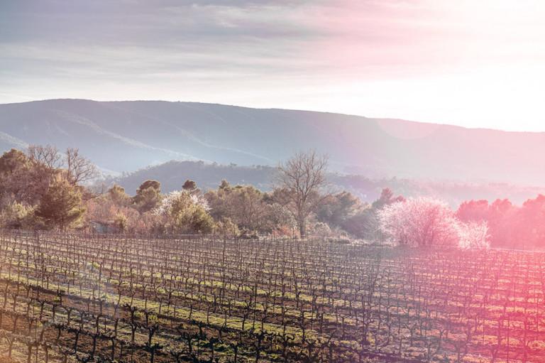 Mariage en hiver en Provence