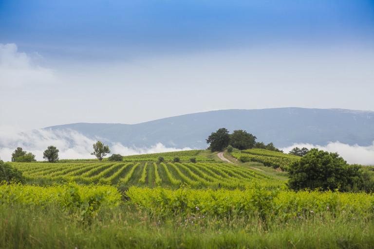 Mariage dans le vignes en Provence