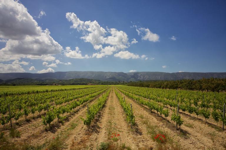 Mariage dans domaine viticole en Provence